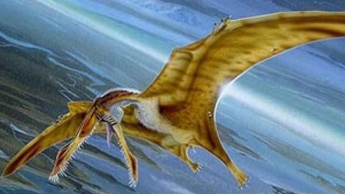 Ahora Resulta Que Los Pterodactilos No Podian Volar Segun Dice Un Cientifico En la prehistoria, concretamente en las aguas marinas, existieron dinosaurios muy feroces. ahora resulta que los pterodactilos no
