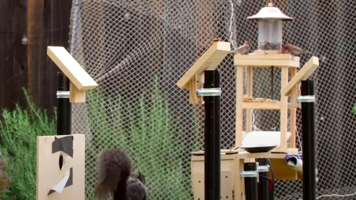 Comedero para pájaros a prueba de ardillas