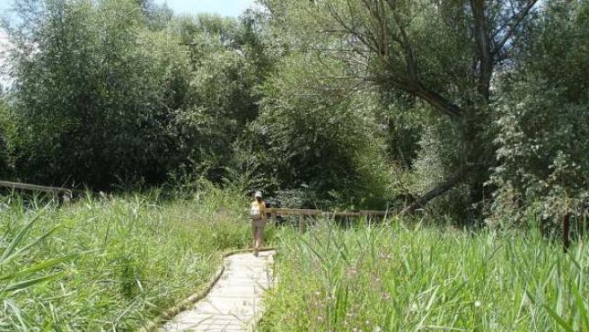 Riberas de Castronuño-Vega, una suerte de oasis en la meseta castellana.