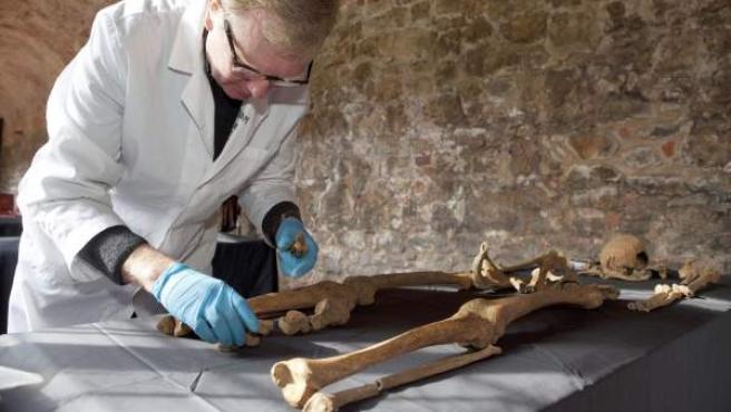 Un experto analiza uno de los 25 esqueletos desenterrados en marzo de 2013 en Londres, que pertenecen a víctimas de la Peste Negra.