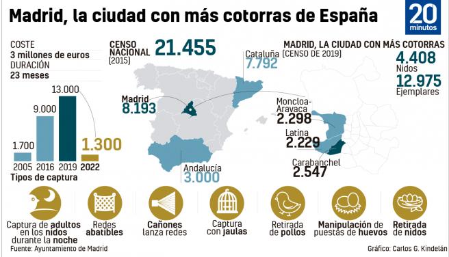 En el censo realizado en 2019 en el municipio de Madrid se localizan 4.408 nidos y su población se estima entre 11.154 y 12.975 ejemplares, lo que representaría casi el 50% de la población nacional según la cifra obtenida a nivel estatal, informa Madrid. Ayuntamiento.