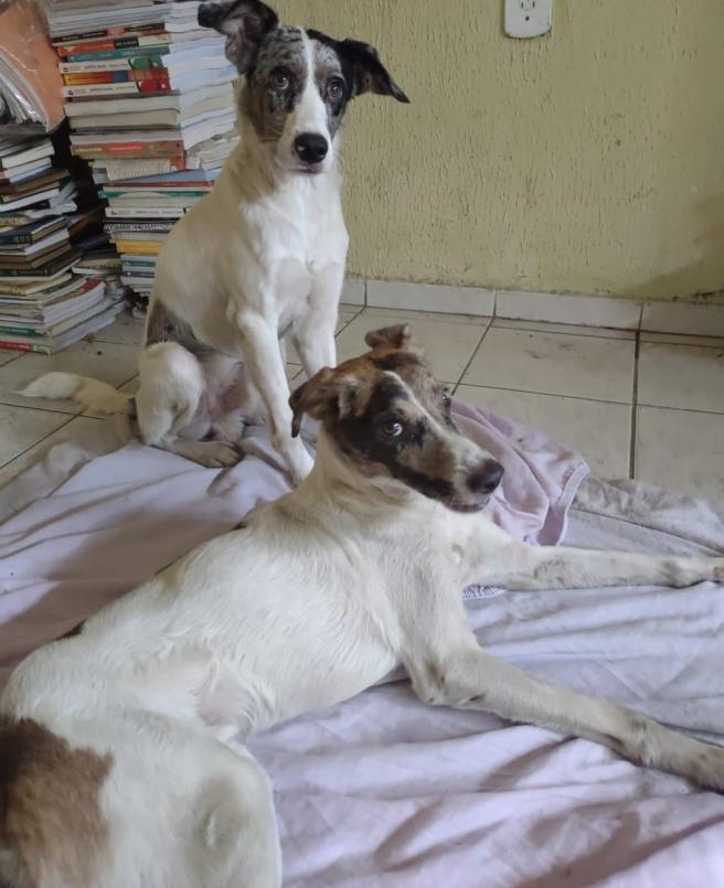 Caju y Castanha solo serán adoptados juntos.