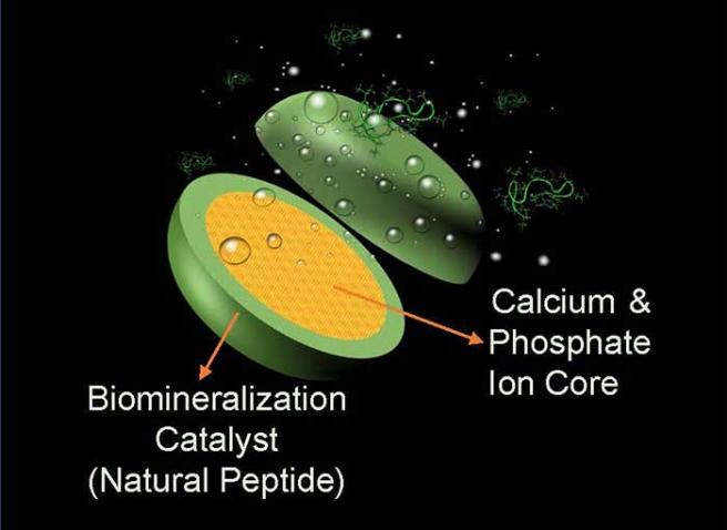 El invento contiene un péptido genéticamente modificado.