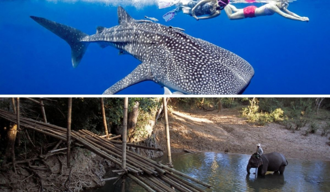 Swim with sharks in Koh Tao (above) or bathe with the elephants (below).