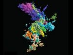 Recreación de un cromosoma en 3D.