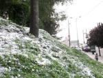 Restos de polen esparcidos en un jardín urbano.