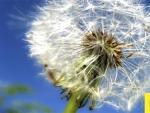 El 33 por ciento de los españoles sufre algún tipo de alergia.