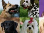 Perros de diferentes razas