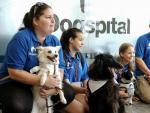 La presentación de Dogspital, en el hospital de Can Misses de Ibiza.