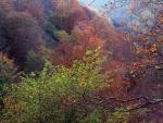 El otoño comenzará el 23 de septiembre.