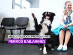 Mascotas con profesiones: Perros bailarines