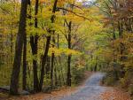 Una vista del follaje de otoño, en una vereda boscosa en Pack Monadnock, New Hampshire (EE UU).