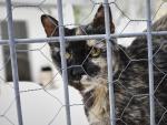 Un gato observa por la verja de las instalaciones adecuadas del albergue San Francisco de Asis de la Sociedad Protectora de Animales y Plantas de Madrid.