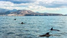 Paseo en catamarán con avistamiento y escucha de cetáceos en Tenerife