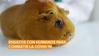 ¿Te expondrías al coronavirus para ayudar a los científicos a encontrar una vacuna?