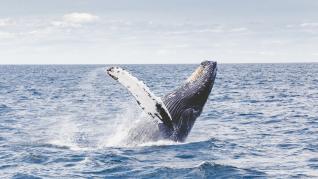 La ballena como protagonista
