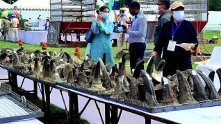 Quemaron 2.500 cuernos de rinoceronte en India