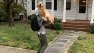 Los adorables vuelos de un perro para recibir abrazos