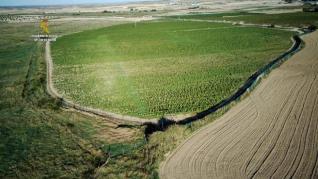 Desmantelan en Toledo la mayor plantación de marihuana de Europa