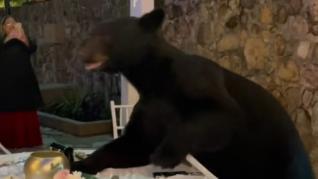 Una boda recibe un invitado sorpresa: un oso aparece en medio del banquete
