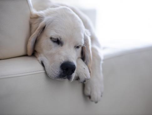Perros - Últimas noticias de Perros en 20minutos.es