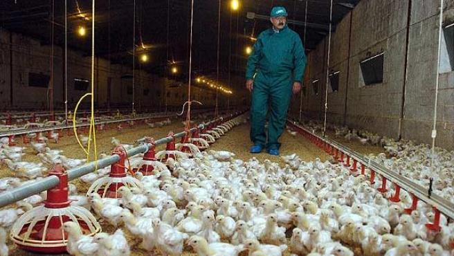Una granja avícola de Guadalajara. (Archivo)