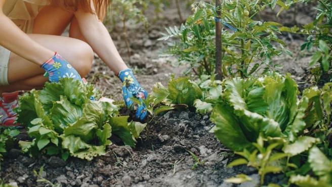 Jardinería, bricolaje o repostería son algunos de los hobbies más populares.