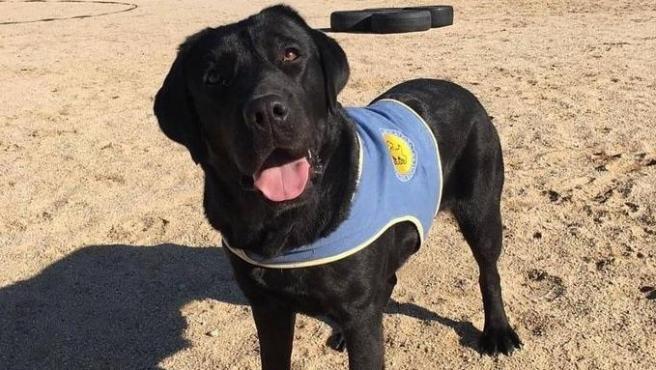 Pocahontas, la perra especializada en ayuda a personas con discapacidad robada en Aranjuez