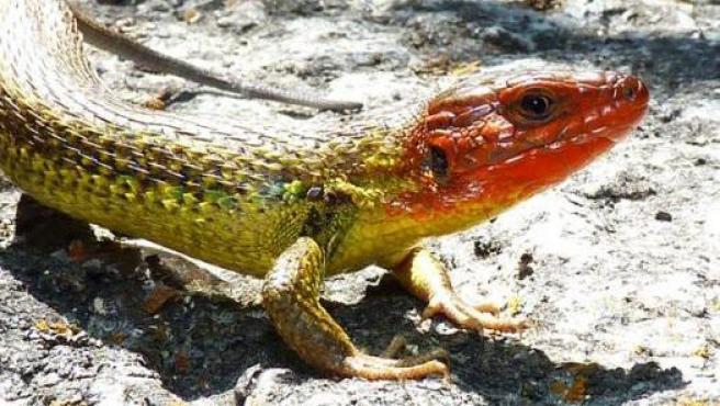Varias especies de lagartijas