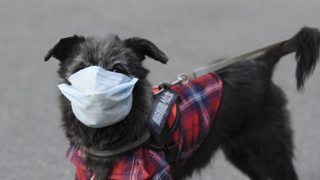 Un perro con una máscara en Hefei (China), en medio de la propagación del nuevo coronavirus.