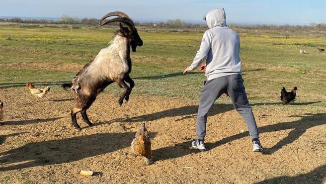 Zabit Magomedsharipov (derecha) y una cabra montesa (izquierda).