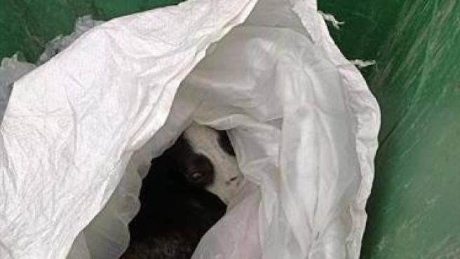 Imagen del perro rescatado por Policía local de Fuenlabrada tras ser arrojado a un contenedor.