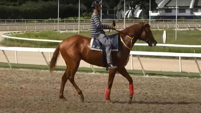 El caballo Ocean Bay