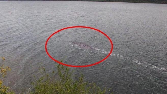 Imagen falsa del monstruo del lago Ness.