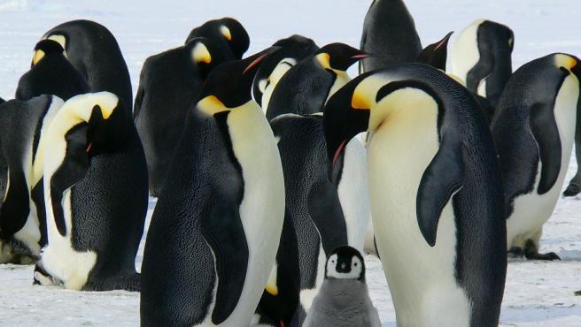 Imagen de recurso de unos pingüinos.