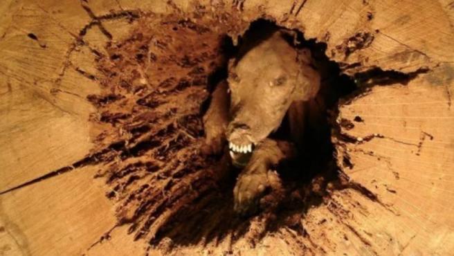 El perro momificado hallado en un árbol de Georgia, EE UU.