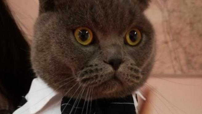 Gato persa con esmoquin