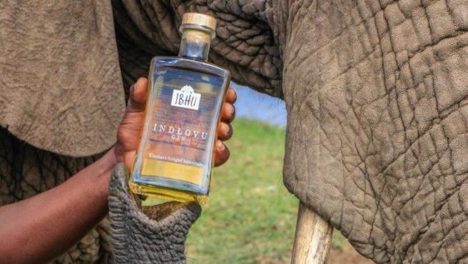 La ginebra se elabora a partir de los excrementos de los elefantes.