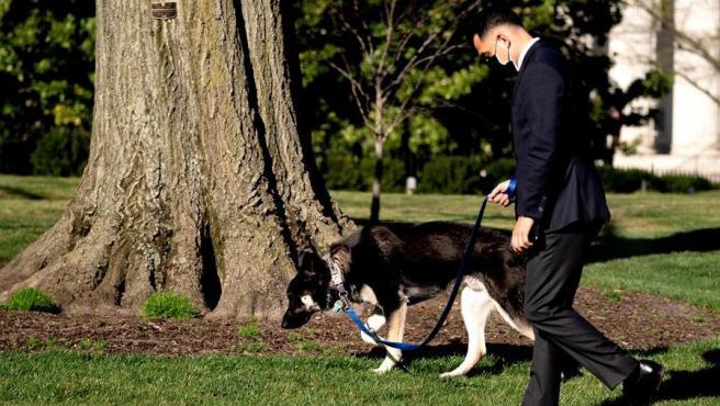 Un empleado pasea a Major, uno de los dos perros del presidente de EE UU, Joe Biden, en la Casa Blanca.