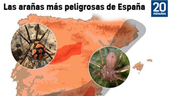 Las arañas más peligrosas de España