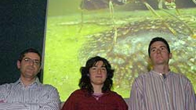 Investigadores de la Universitat de Girona han expuesto su informe sobre la hormiga argentina