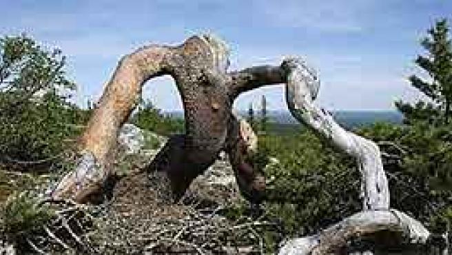 Los bosques primarios cada vez acusan más los estragos de la industria papelera. (Foto: Greenpeace)