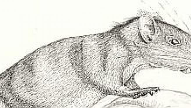 Un dibujo del animal (AP)