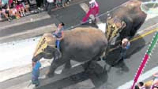 Los elefantes del Gran Circo Mundial recorrieron las calles.