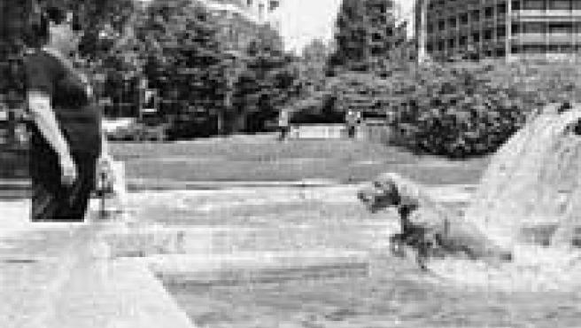Un perro refrescándose ayer, a mediodía, en la fuente de la plaza de España de Madrid.