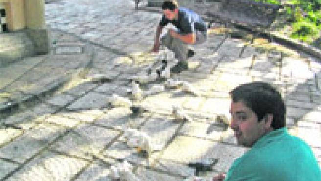 Técnicos municipales atrapan palomas con redes, ayer en el Portal de Elche.