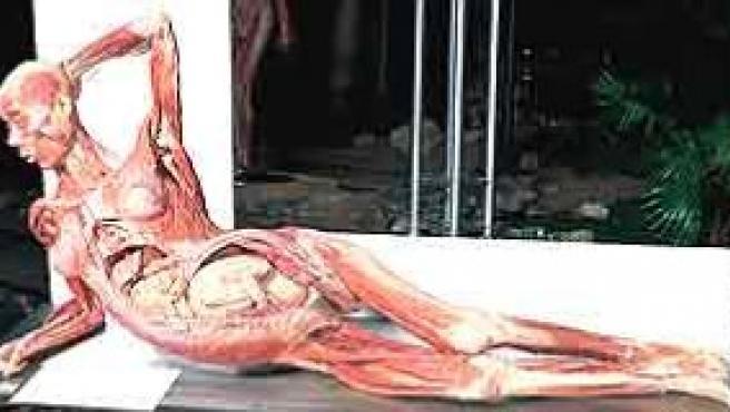 Una de las piezas de una similar y también polémica exposición con cadáveres humanos, Body Worlds.