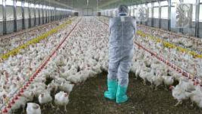 Un granjero italiano con sus pollos (Reuters).