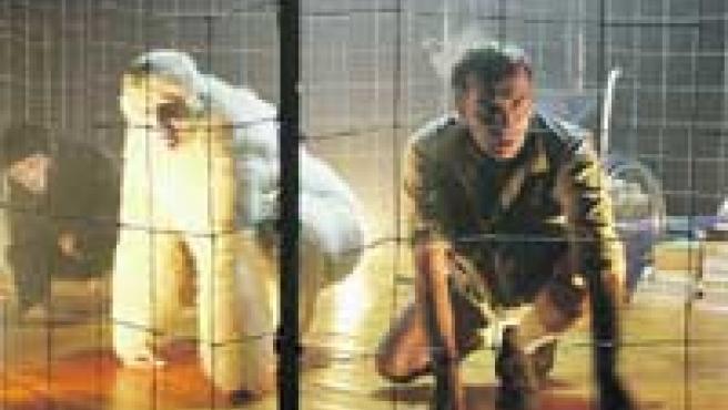 Copito de nieve en su jaula, con su cuidador y su compañero orangután.