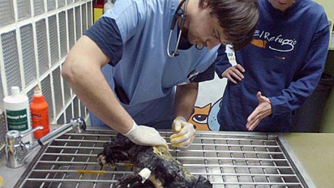 La perrita, atendida por veterinarios (Efe).